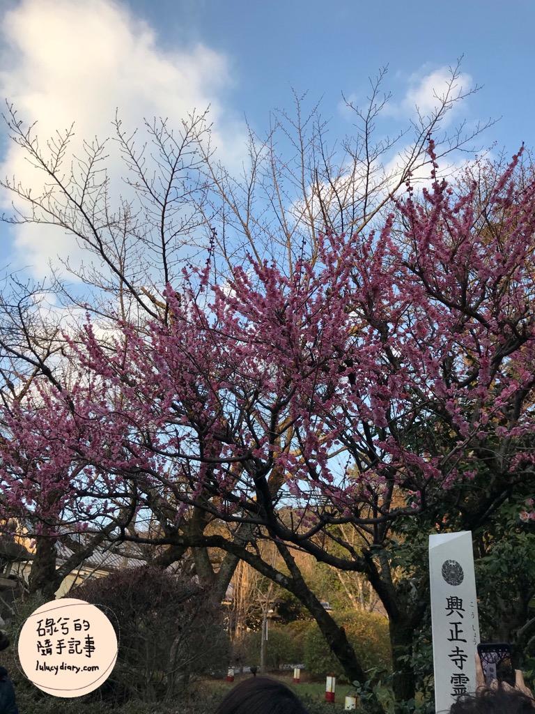 kiyomizudera 0012 - 京都景點, 京都自由行, 清水寺, 音羽山